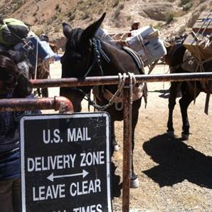 Mule Mail Carriers